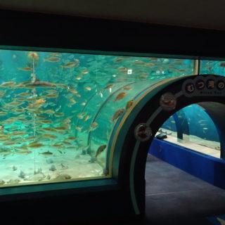 青森県営浅虫水族館のトンネル水槽の入口
