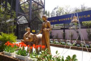 市原ぞうの国が「ANIMAL WONDER REZOURT」にリニューアルしたので行ってみたときの撮影スポット