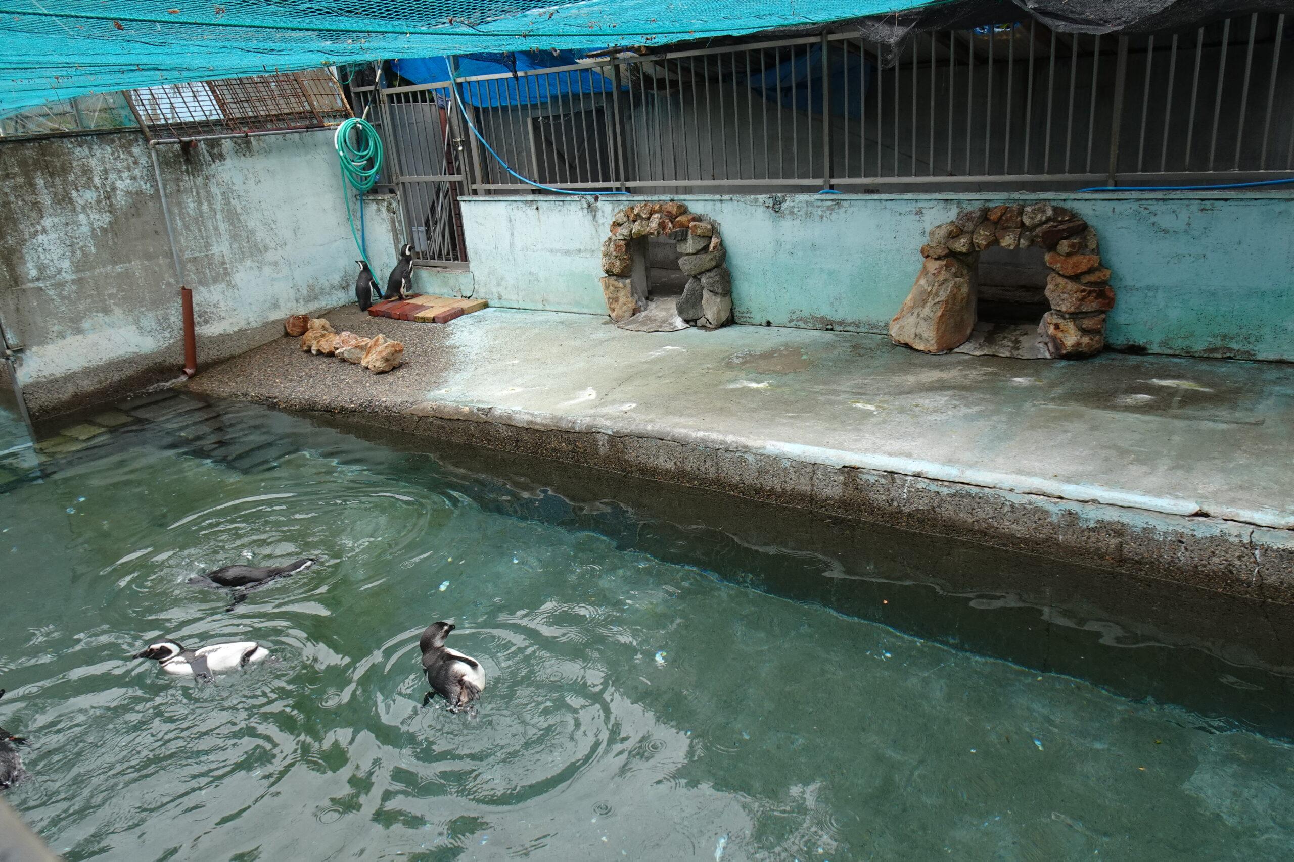 宇都宮動物園のペンギン
