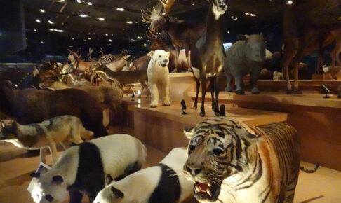 国立科学博物館の地球館の3階の剥製