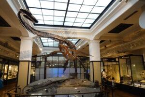 国立科学博物館の日本館に展示されているフタバスズキリュウ