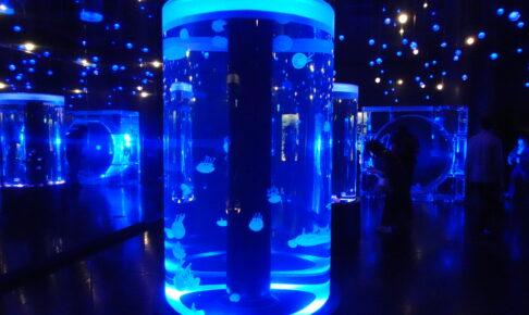 マクセルアクアパーク品川のジェリーフィッシュランブルの展示