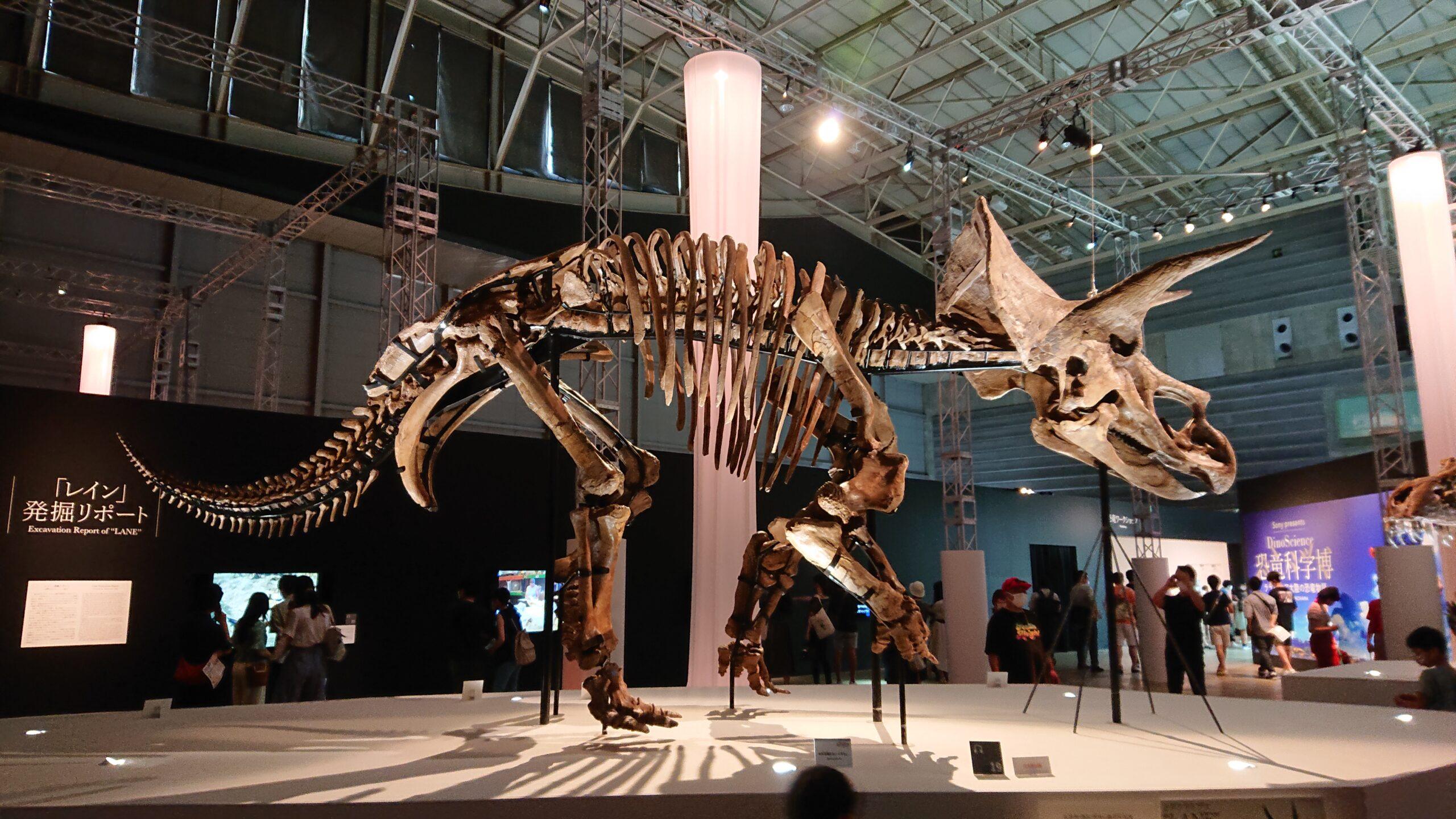 恐竜科学博のレイン