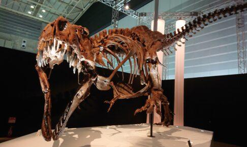 恐竜科学博のティラノサウルススタン