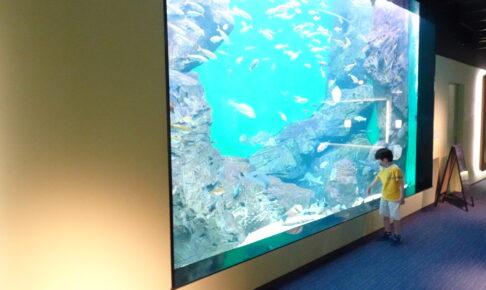 四国水族館の瀬戸内ゾーンの展示は子どもにも大人気