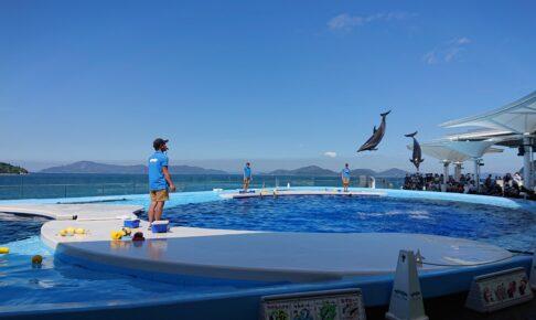四国水族館のイルカのジャンプ